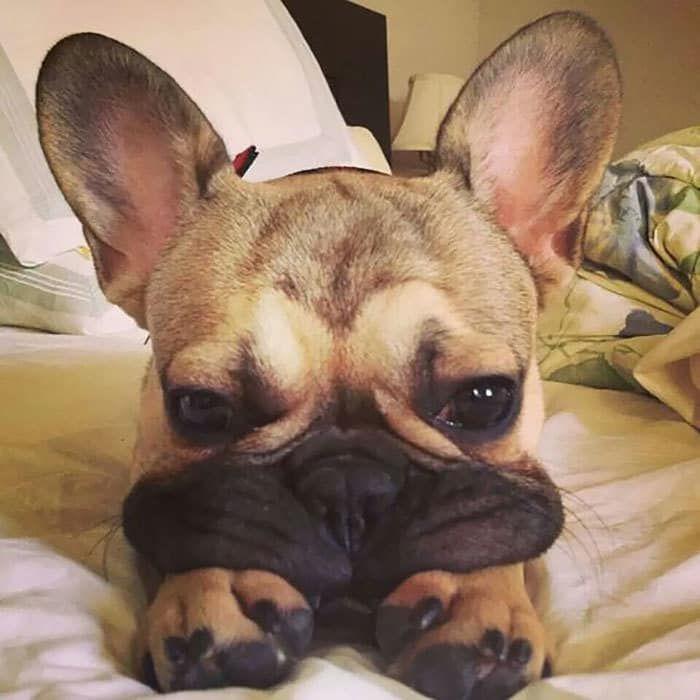 18 чудесных собак, чьи щёчки срочно должны быть потисканы