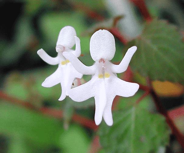 15 цветков, которые похожи на что-то другое. Прекрасные творения природы!