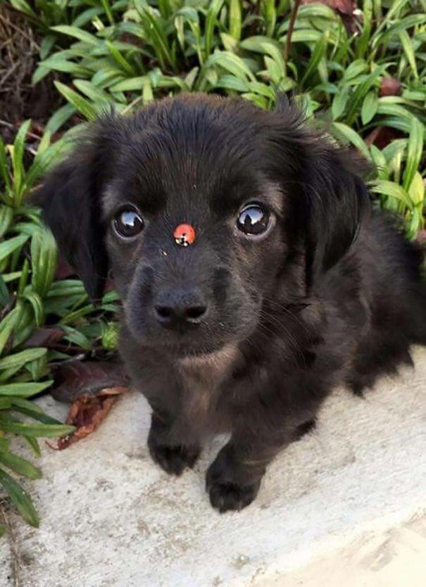 20 щенков, которые выглядят слишком прелестными, чтобы быть настоящими