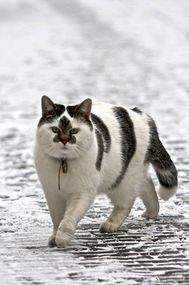 Кошки с необычным окрасом, которые подарят вам улыбку (27 фото)