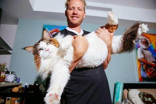 Такого огромного кота вы ещё не видели. Великанский комочек шерсти! (9 фото)