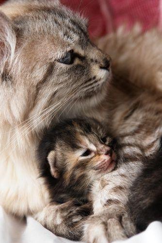 Мамы и их маленькие копии (15 фото)