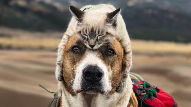 Коты, которые по уши втрескались в собак
