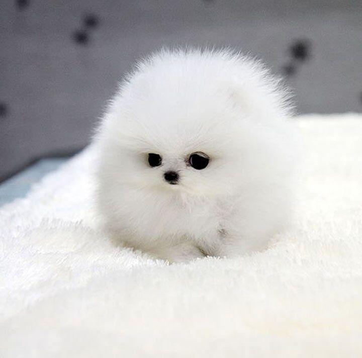 Подборка самых милых щеночков, которые подарят дозу умиления всем