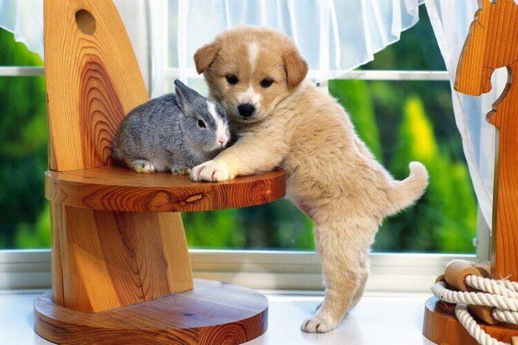 Снимки уникальной дружбы разных животных