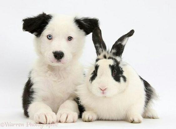 Животные разных видов с удивительным сходством