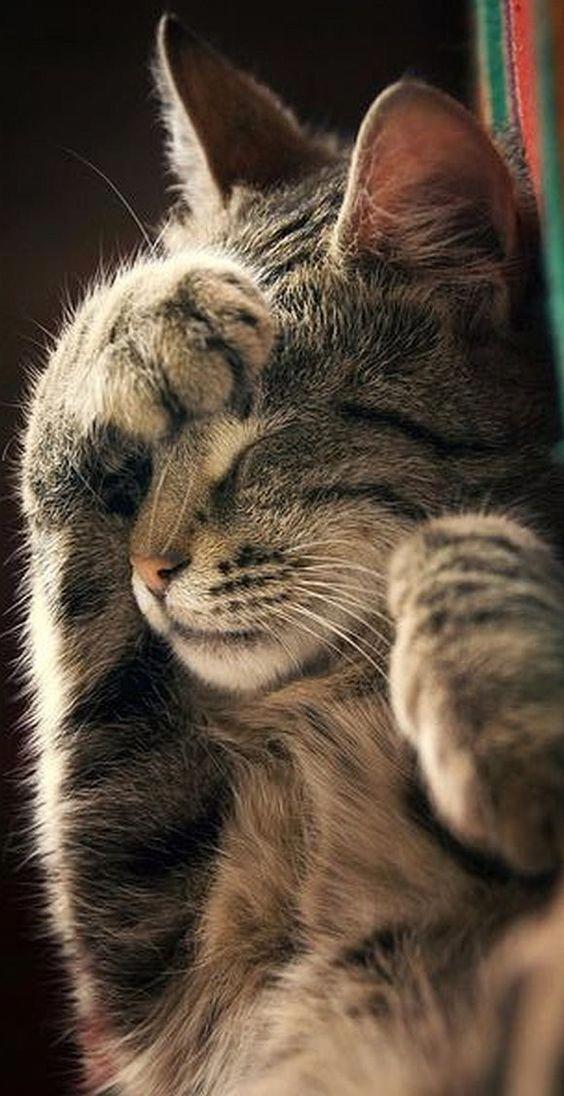 Мимимишные котята