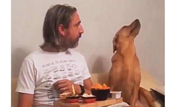 Собака смешно делает вид, будто ее ни капельки не волнует, что там ест хозяин