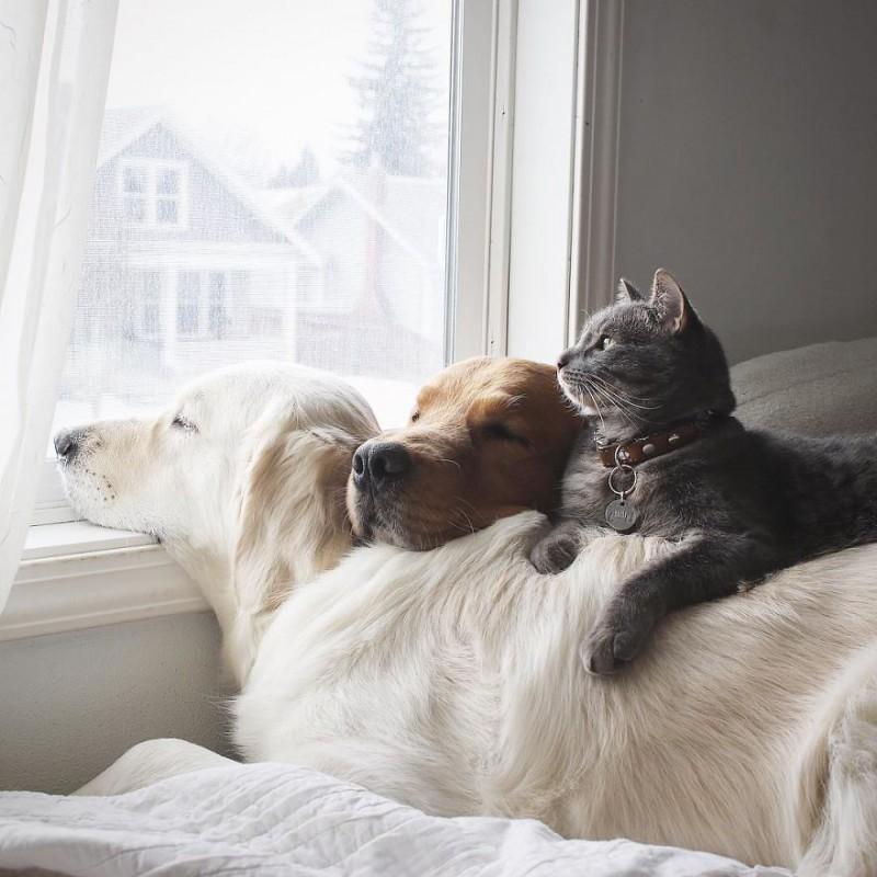 Две собаки и кот живут вместе как одно целое