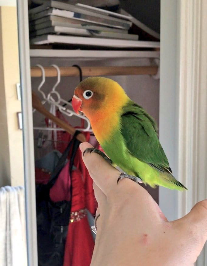 Яркий попугай и его необычная подружка стали родителями